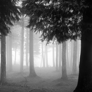 Black Cypress & Cassis