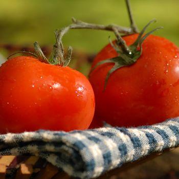 Sun Ripened Tomato