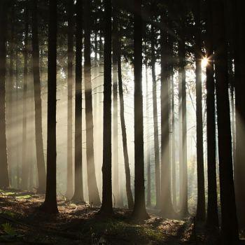 Twilight Woods (type)