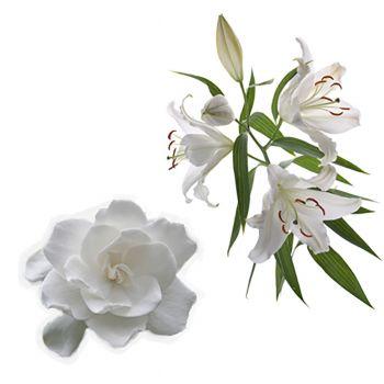 Gardenia Lily (type)