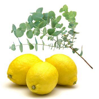 Lemon Verbena (type)
